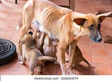 puppies suckling milk from their mother's breasts