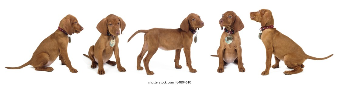 puppies with white background