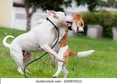 puppies White Bull Terrier and beagle Bicolor playing jumping in the other on a grassy square with some trees in the background