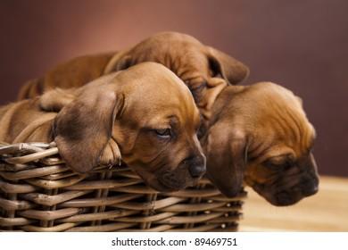 Puppies, wicker basket