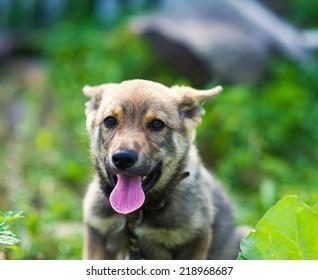 puppy 2 months