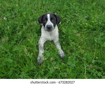 Puppy among clover and green grass