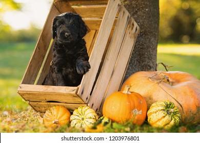 Puppy with autumn decoration in a garden