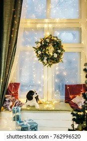 Puppy in the background of the New Year . New Year's decor. Cavalier king charles spaniel puppy with giftbox.