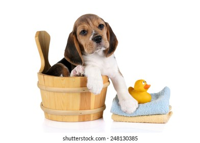 puppy in a bathtub  with yellow plastic duck and towel,  , isolated on white background