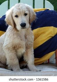 Puppy at the beach.