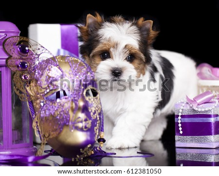 Puppy Beaver Yorkshire Terrier On Violet Stock Photo Edit Now