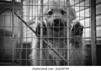 puppy behind bars