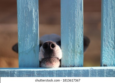 puppy behind wooden fence bars peeking nose funny little dog