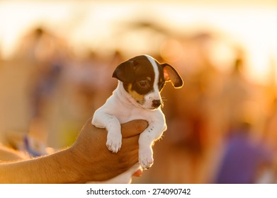 Puppy being held up in beautiful sunset light