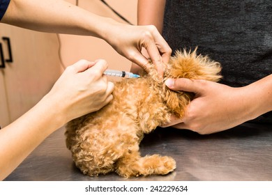Puppy being vaccinated by a vet at the clinic