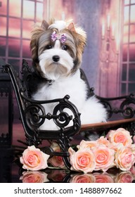 puppy biewer yorkshire terrier and roses flowers