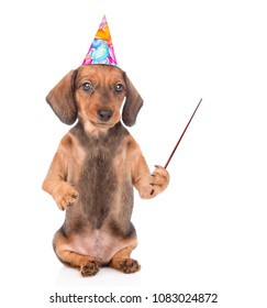 Puppy in birthday hat holds pointing stick. isolated on white background