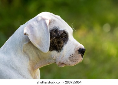 Puppy with black eye profile