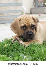 Puppy with a bone