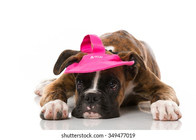 Puppy with cap