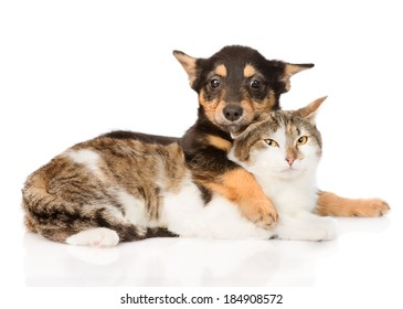 puppy and cat friendship. isolated on white background