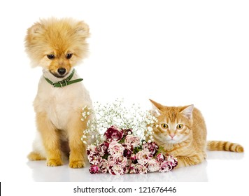 the puppy and cat sit near flowers. isolated on white background