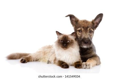 puppy and cat together. isolated on white background