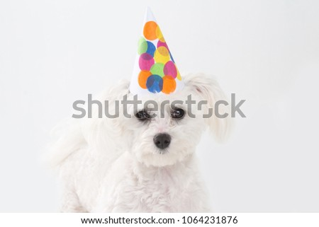 Puppy Celebrating First Birthday On White Background With Colourful Confetti