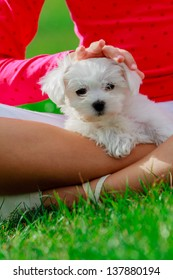Puppy, child - lovely girl playing with cute puppy in the garden