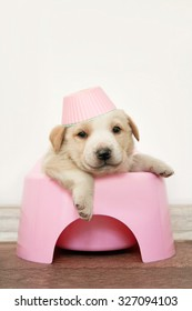 Puppy in childhood pink pot. Copy space