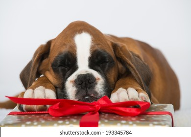 Puppy with christmas gifts isolated on white