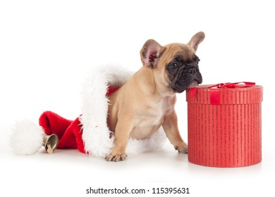 Puppy as christmas present