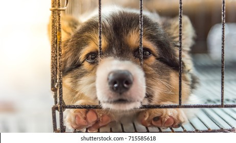 Puppy so cute sleeping alone in cage dog with sadness and lonely