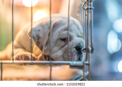 Puppy so cute sleeping or waiting alone in dog cage in pets shop or pets shelter with sadness and lonely and hope to freedom