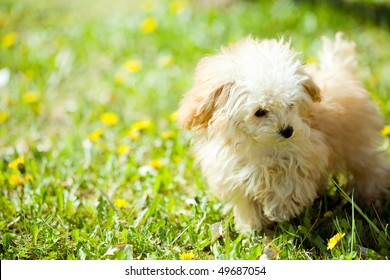 puppy & dandelion