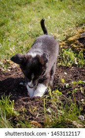 Puppy digging outdoors in garden
