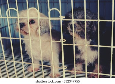 puppy dog in the cage
