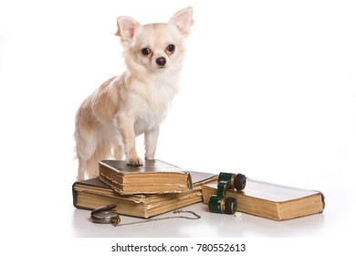 Puppy dog chihuahua and old books (isolated on white)