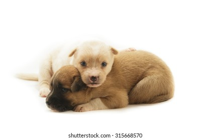 Puppy dog isolated on white background.