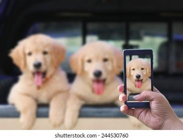 puppy dog puppy love take photo in smart phone