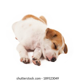 puppy dog lying isolated on white background