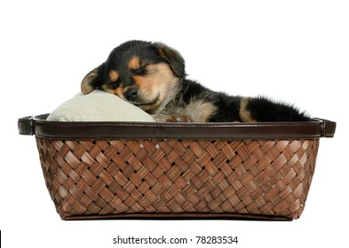 A puppy dog lying in a wicker basket is isolated against a white background.