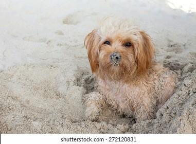 puppy dog  on beach