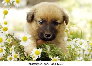 puppy dog on flower background