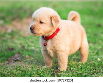 puppy dog on the grass