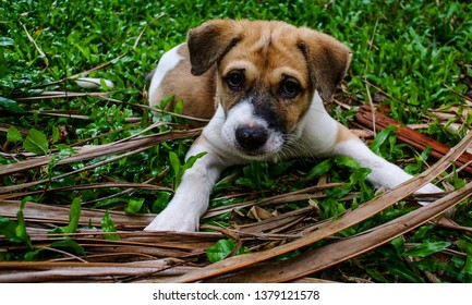 Puppy dog on meadow