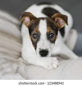 puppy dog portrait 4 months old