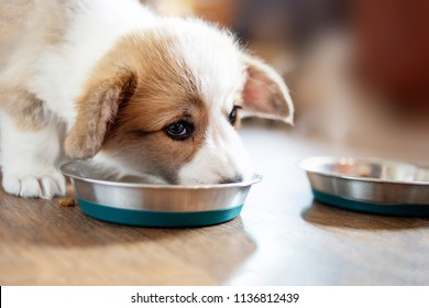 Puppy eating food in the kitchen from bowls. Cute puppy eating dog food on wooden floor, top view