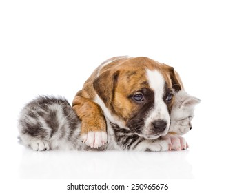 puppy embracing scottish kitten. isolated on white background