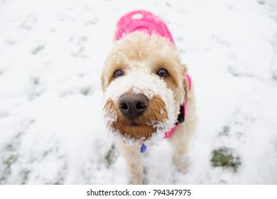 Puppy enjoying the snow