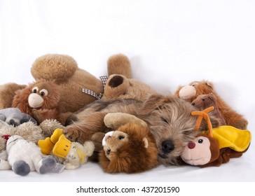 Puppy fast asleep between stuffed animals