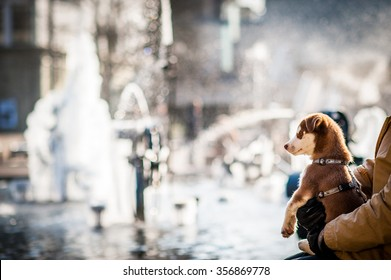 A puppy and fountain