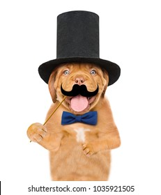 puppy gentleman wearing tie bow and cylinder hat holds  mustache on stick. isolated on white background