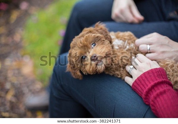 Puppy gets a belly rub from new owners